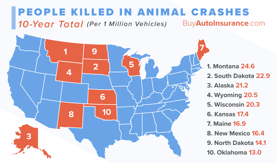 drivers killed in animal crashes
